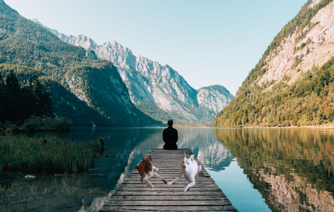 American Zen Dogs